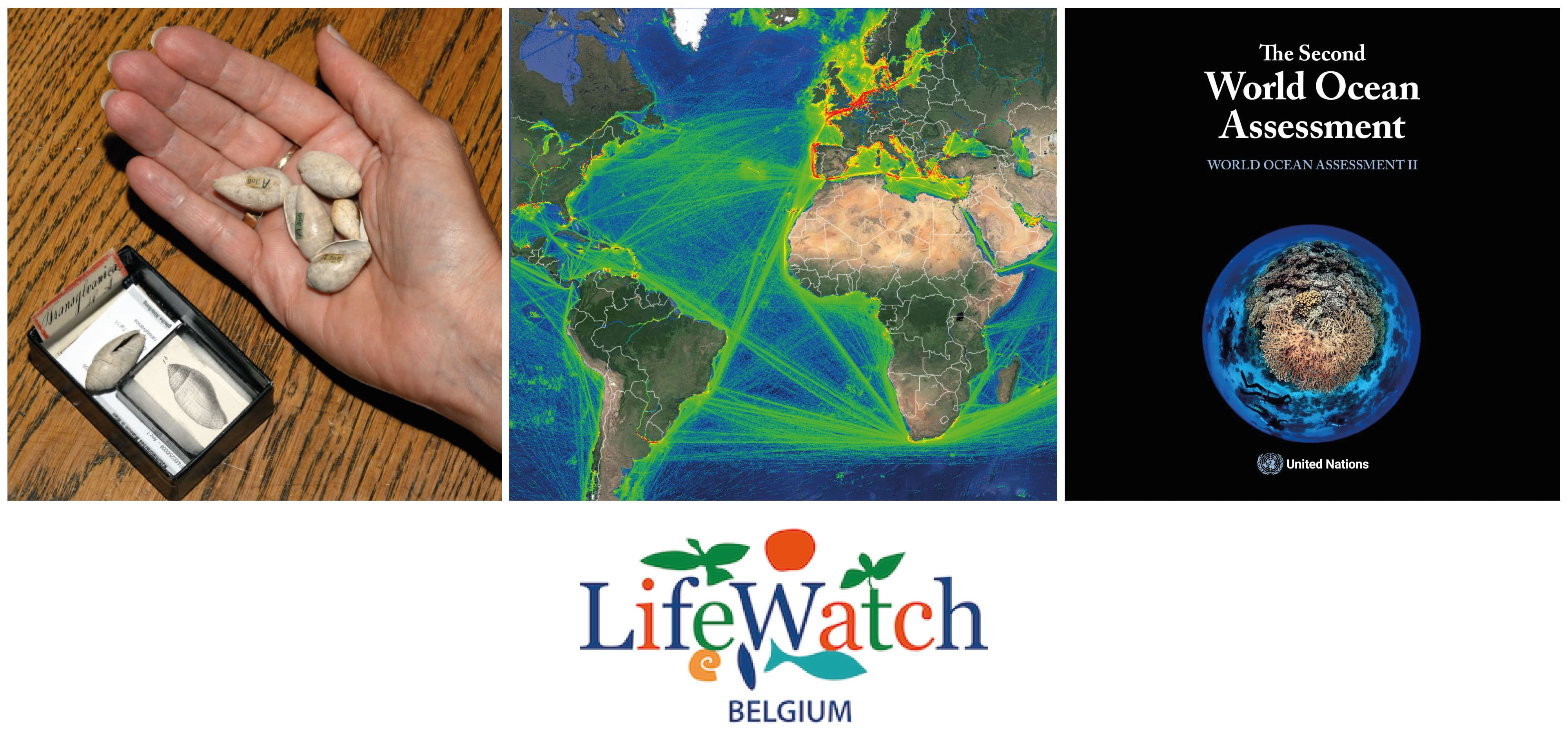 Collage of photos from LifeWatch Belgium news